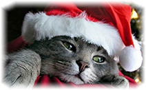 cat-new-year-santa
